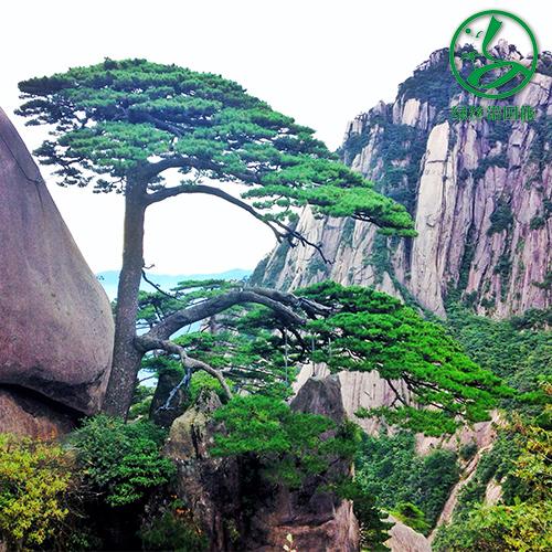 宣城加盟海外旅行安徽六安市怎么加盟旅游