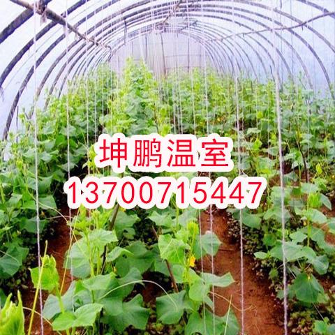 蔬菜大棚膜批发厂家,朔州优质大棚配件生产厂家