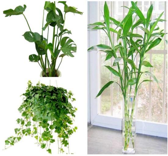 昼夜对植物的影响