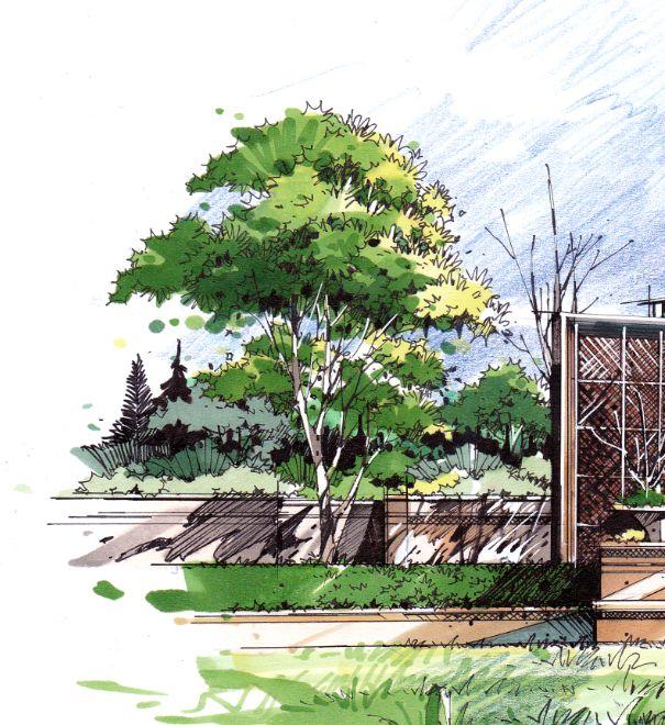 如何快速提高景观手绘中植物马克笔上色_卓越设计