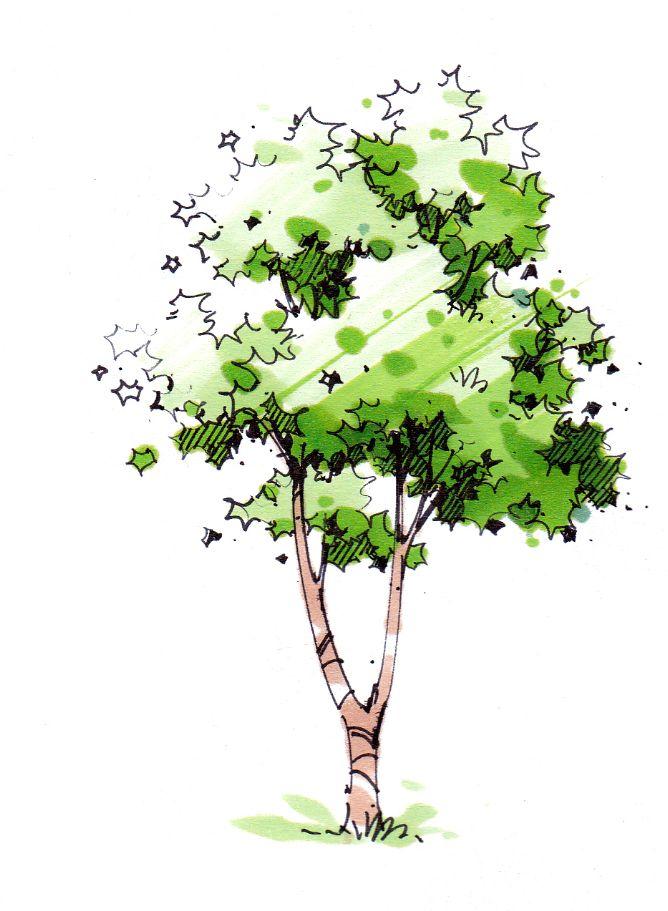 卓越手绘教你如何表达手绘景观植物之一