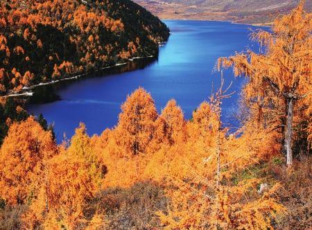 夏之绚烂,位于四川甘孜藏族自治州府的木格措,在秋天化作一杯香醇美酒