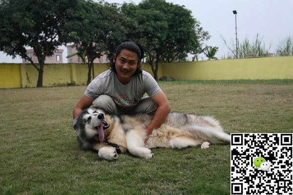 广州金色世家宠物学校