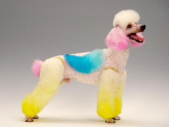 微信另类创意头像宠物
