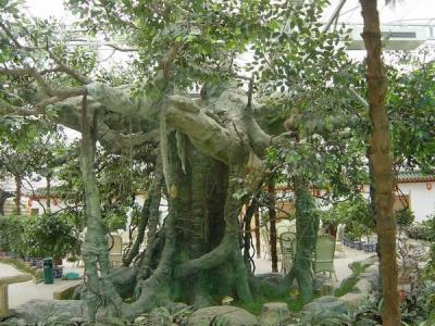 景观松柏树su