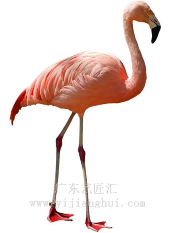 仿真红鹤是一些美丽而优雅的仿真动物,雕塑厂家根据红鹤动物的平时的表情和动作,制作成一只栩栩如生的仿真红鹤,躯干部羽毛红色,头顶颊部及眼睛是红色,脚部色青,颈部修长,膝粗指细,翅膀和尾部有羽毛也显红色,形象逼真颇为美丽!
