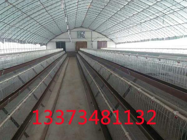 如何正确的用大棚养殖肉鸡肉鸭