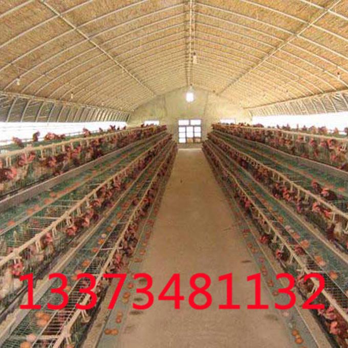河南肉鸡养殖大棚的养殖优势