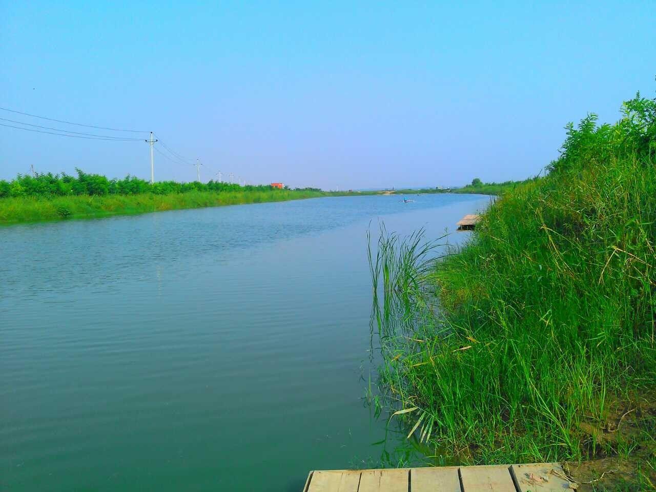 鲤鱼群风景图片