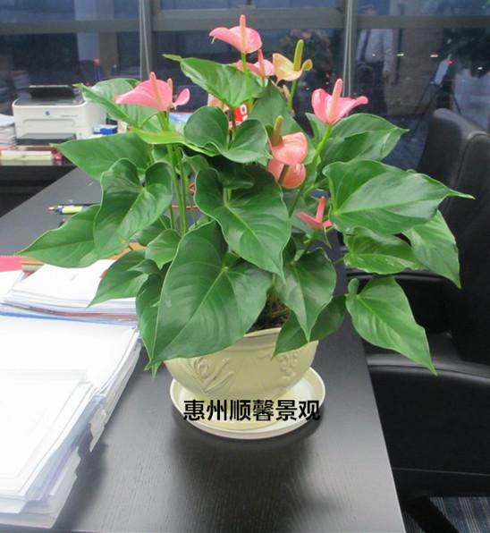 惠州顺馨园林景观花场凭着雄厚的实力和