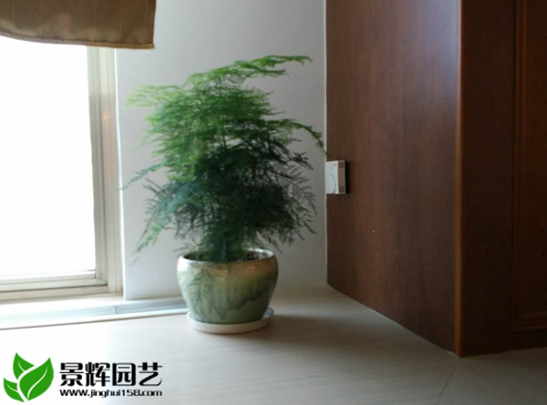 上海景辉园艺有限公司是一家专门为上海地区的各企业事业单位、商务楼、写字楼、办公楼等提供花卉租赁、植物租摆、室内外景观设置、绿化施工及养护服务的企业,服务热线:4008-202-796 网址:www.jinghui158.com 水培养物有下面多少个长处:其一,因为水分能够自在蒸发,在同样环境中,比盆土栽培的动物在调节空气湿度方面存在更显明的作用;其二,水养植物可省略掉盆土的治理工作,干净卫生,养护简略;其三,如选用一些根系可以裸露在光下的植物,配上合适的容器,植物全株都可以观赏,具备更高的欣赏价值.