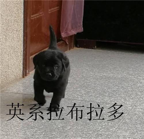 爱心托狗所,北京山村狗狗寄养,狗狗度假村