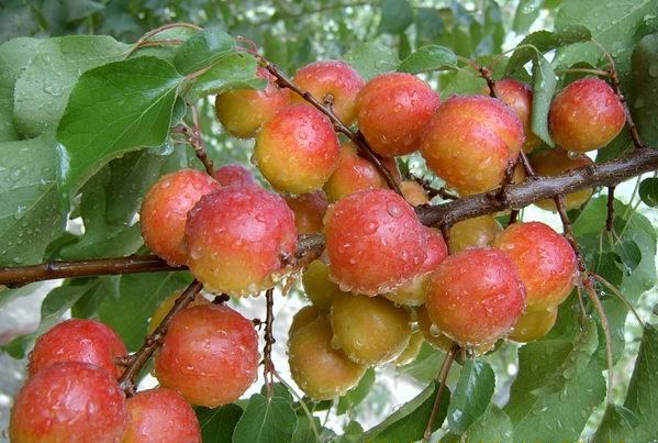 陕西果树苗培育基地
