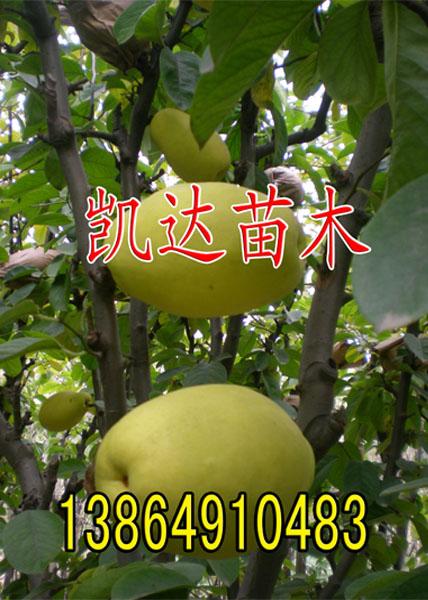 及各种果树苗木桃树苗,梨树苗,山楂苗,柿子苗,石榴苗,苹果苗,核桃苗