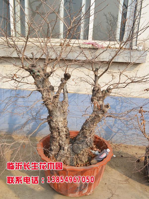 果树根系形态分类