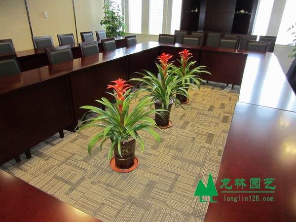 浦东区办公室绿植盆栽租赁|植物租赁送货上门