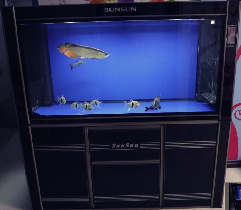 森森鱼缸图片