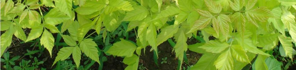 东北室内观赏树种都有哪些?都怎么样栽培!