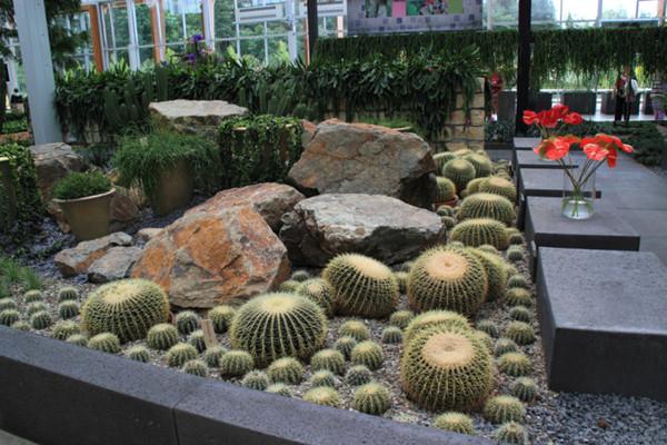 硬质景观的植物搭配