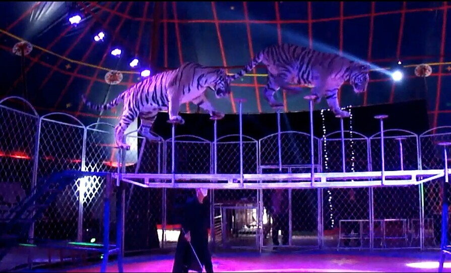 高空杂技|猴子汽车表演大型马戏团|静态动物展