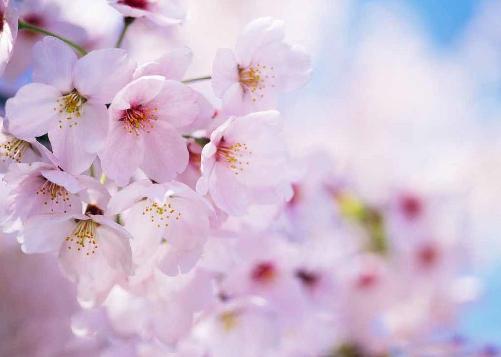 """日本人眼中""""春天来了""""的信号有哪些?是暖暖的春风?美美的连衣裙?"""