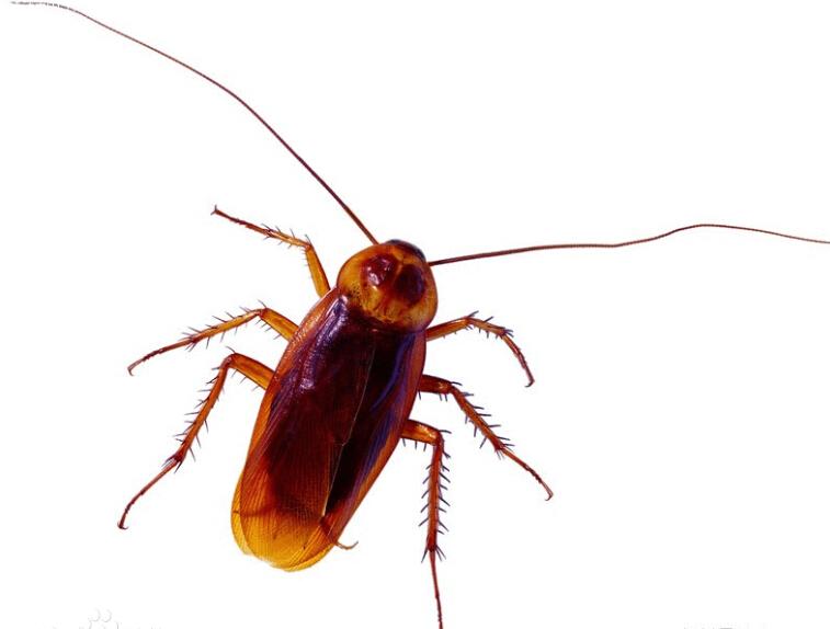 分类广告   我公司承接,老鼠,蟑螂,蚂蚁,白蚁,蚊蝇等有害bing媒生物的