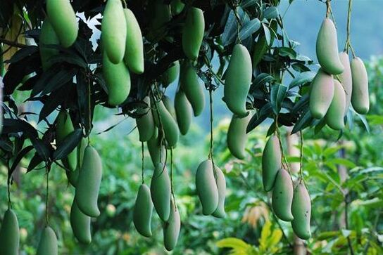 蔬菜果园简笔画