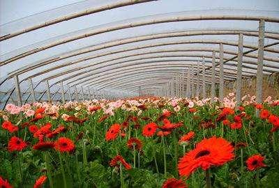 壁纸 成片种植 风景 花 植物 种植基地 桌面 400_270