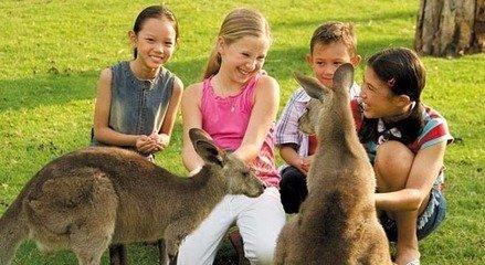 澳洲动物互动图片