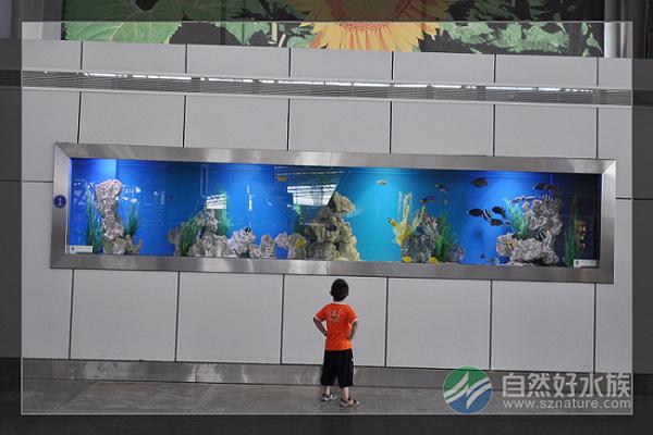 自然好水族是一家集大型观赏鱼缸制作,水族工程,水族景观设计,观赏鱼