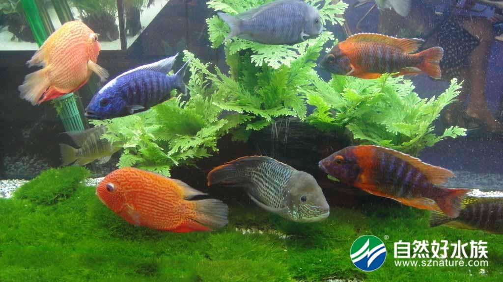 动物 水草 水生植物