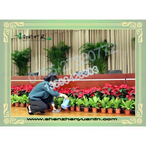 深圳优惠的园林绿化养护服务商