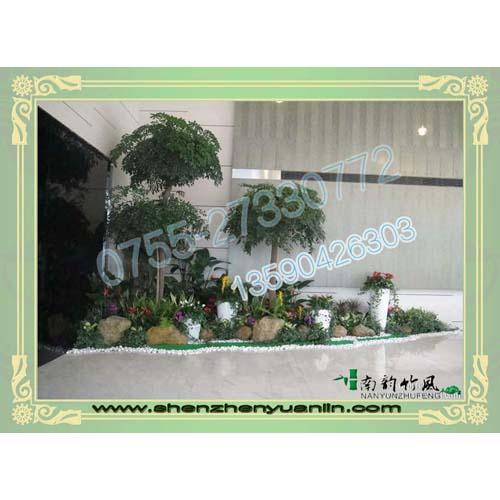 深圳优惠的园林绿化维护服务商