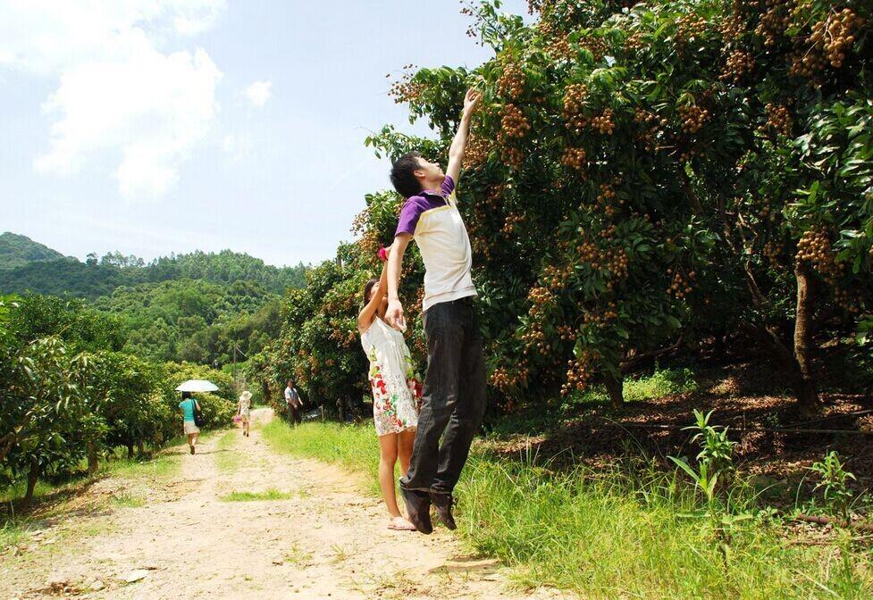 溪谷山庄位于横岗园山风景区内,其中龙眼和荔枝果树的占地面积有二十
