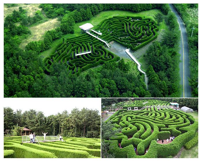 济州岛 金宁迷路公园 介绍