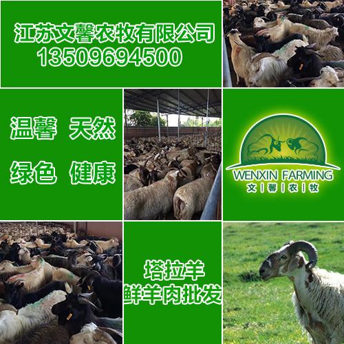 扬州羊肉批发