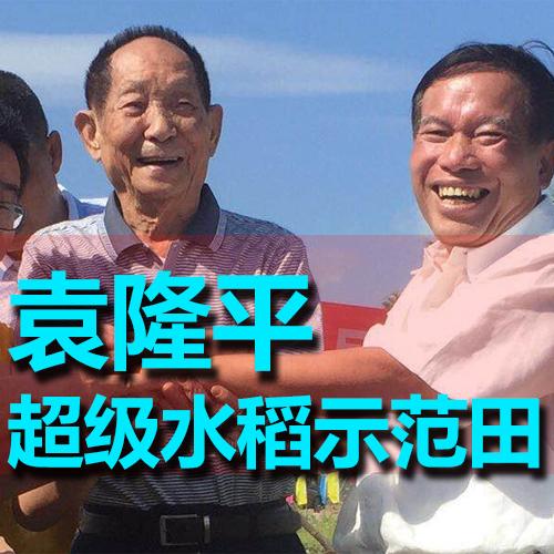 海南三亚市超级水稻禧发娱乐官网官网