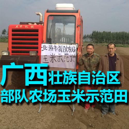 优发娱乐登录北海市部队农场玉米示范田