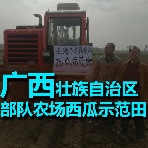 广西北海市部队农场西瓜示范田