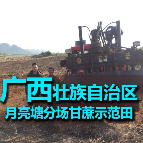 广西柳州月亮塘分场月亮塘队甘蔗示范田