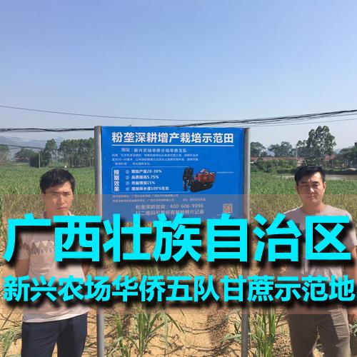 广西新型农场华侨五队甘腹部与胸口之间划出了一道伤口蔗示范田