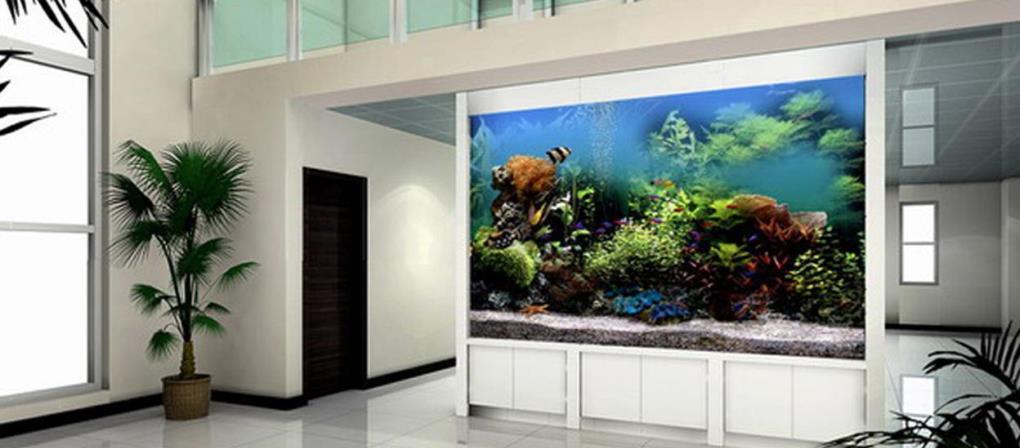 鱼缸壁纸图片大全