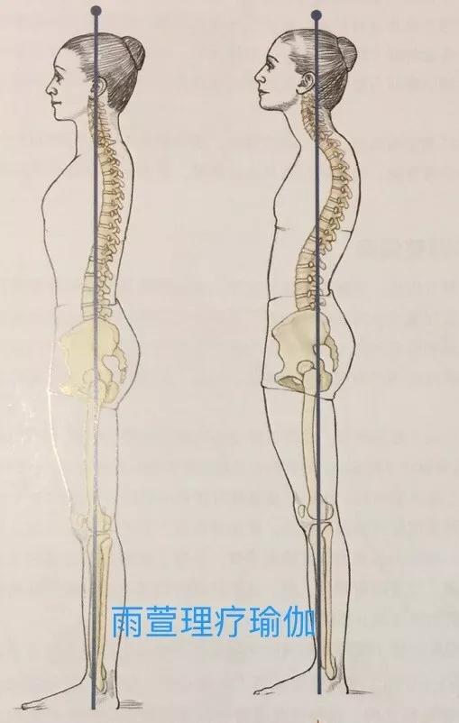 膝盖结构图