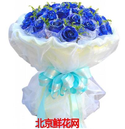 北京鲜花网:33朵蓝色妖姬 米兰 白色卷边纸内衬 白色纱网圆形包装