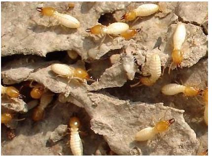 广州花都白蚁预防公司图片