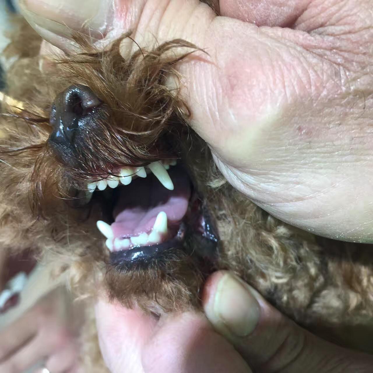 宠物牙齿护理多少钱,新乡哪家宠物美容院专业?