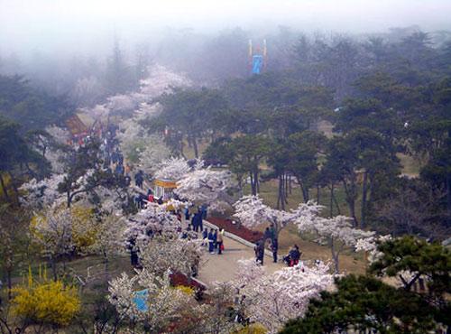 公园东傍太平山,与青岛植物园相接;北靠青岛动物园,青岛榉林公园,西依