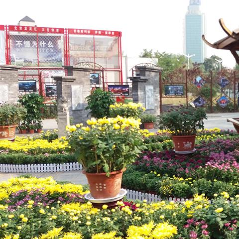 济南济阳县绿植墙,垂直绿化效果,印生园林专业值得信赖欢迎来