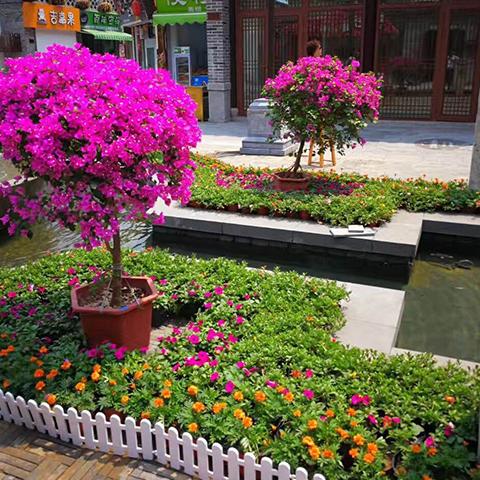酒店绿植租赁,济南历下区绿强价格,印生园林行业典范期待亲来