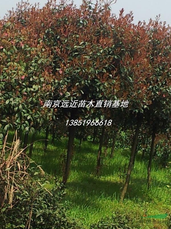 壁纸 成片种植 风景 树 植物 种植基地 桌面 600_800 竖版 竖屏 手机